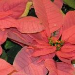 Longwood Gardens - Christmas